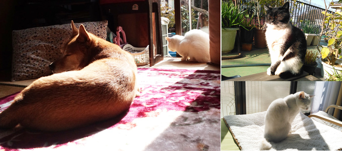 日向ぼっこをする犬や猫