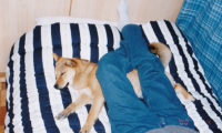 犬と一緒に寝る
