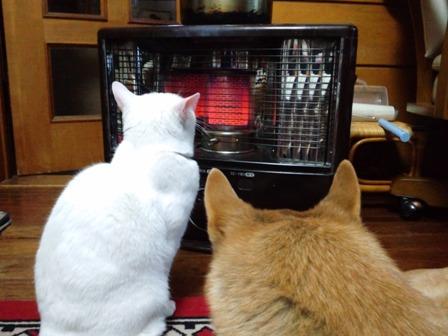 ストーブで温まる犬と猫