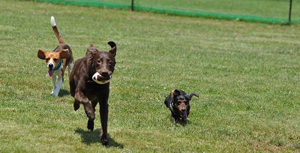 犬が走る姿