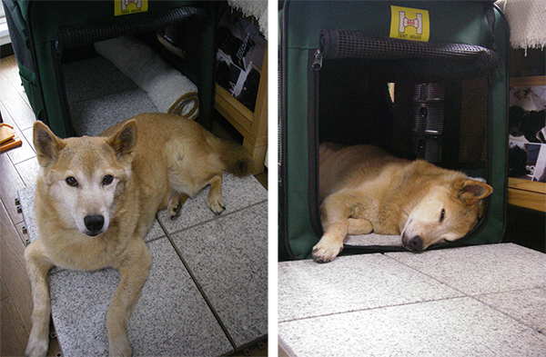 ひんやりした素材(石やテラコッタなどのタイル、またはレンガ)の上で休む犬