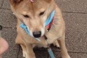 犬 ウィンターノーズ 冬の鼻