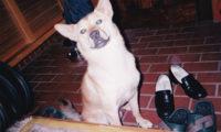 玄関で足ふきを待つ犬
