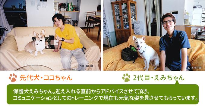 先代犬ココちゃんと2代目の犬えみちゃん