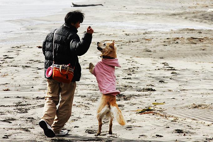 犬と楽しく遊ぶ