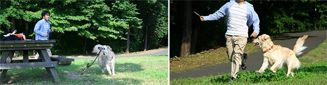 公園に落ちている枝一本など、自然界のもので楽しく協調関係を築きながら遊ぶ犬と飼い主