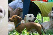 満たされた犬たち