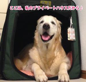 犬のパーソナルスペース