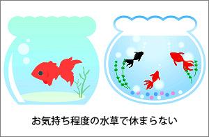 お気持ち程度の水草で休まらない金魚
