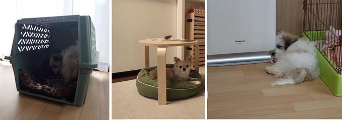 犬が安心して休める場所