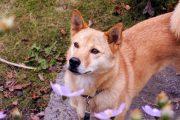 犬(といち)と花