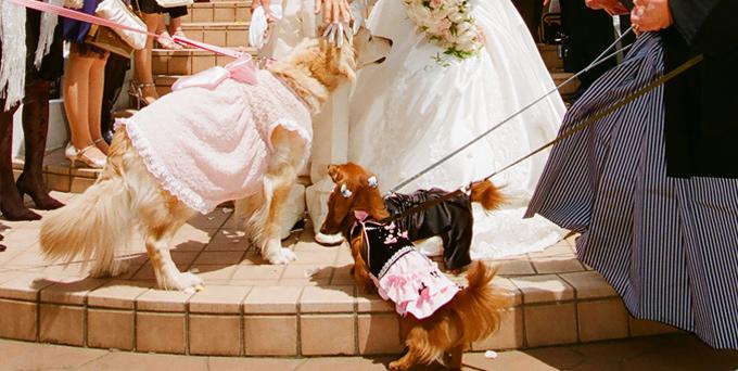 結婚式に出席するわんこ達