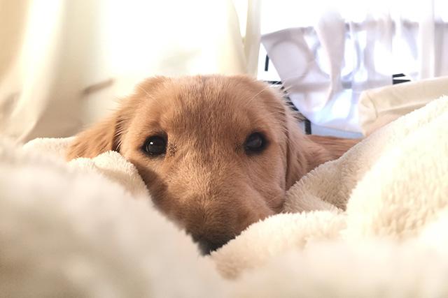 その床大丈夫?犬