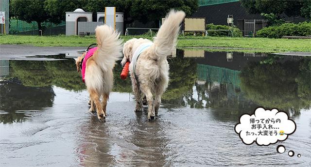 水たまりで楽しそうに歩く犬たち