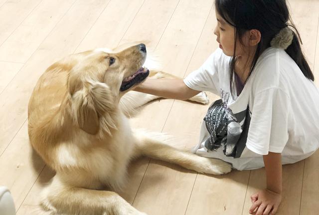 犬にやさしく話しかける子供