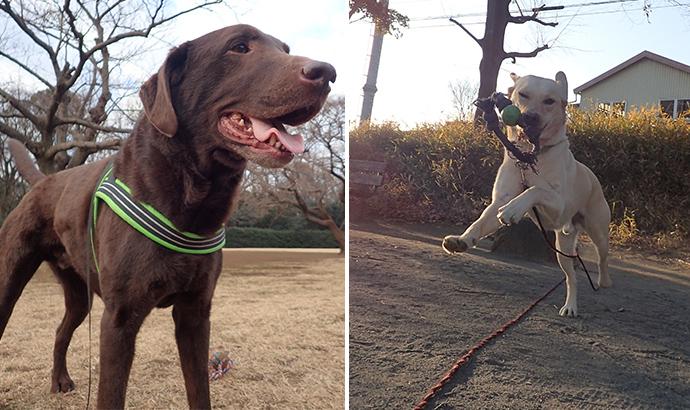 東高根森林公園で散歩をする犬