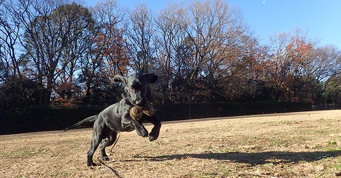 公園で楽しそうに遊ぶ仔犬