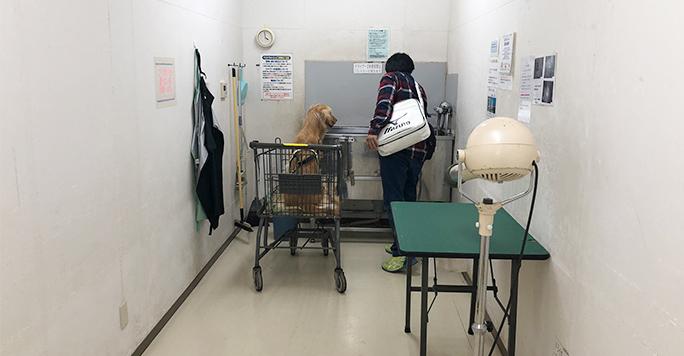 セルフウォッシュ大型犬のお部屋
