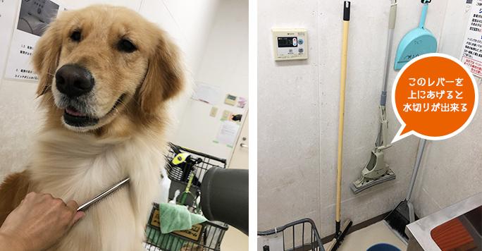 トリミング台でドライ中の犬 お掃除道具