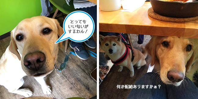 「Cafe Peco」さん店内の様子