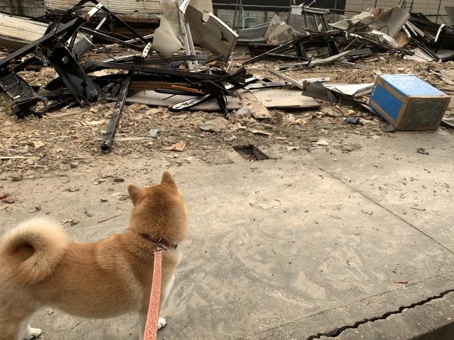 ペット災害