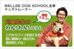 WELLBE DOG SCHOOL主宰 刈屋先生によるわんわんコラム
